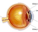 眼精疲労-病気・症状と治療
