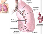 気管支喘息-病気・症状と治療