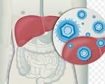 肝炎-病気・症状と治療